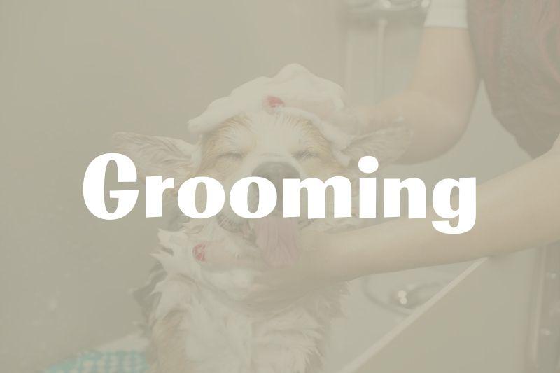 Brookfield WI Grooming