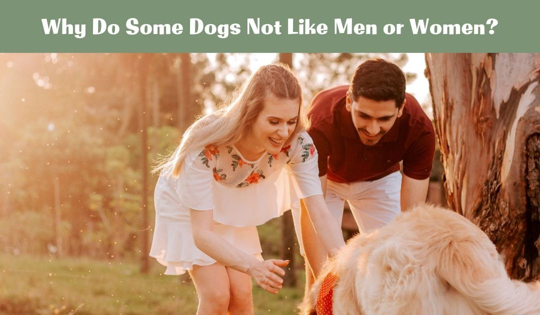 Why Do Some Dogs Not Like Men or Women