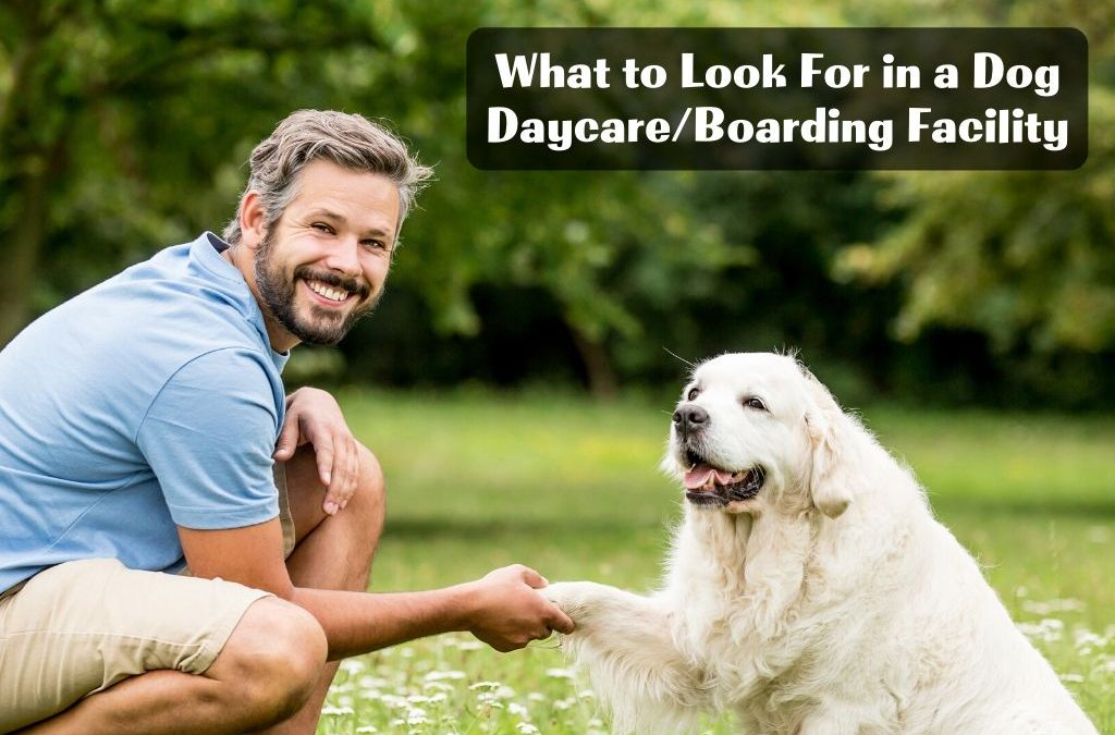 What to Look For in a Dog Daycare/Boarding Facility