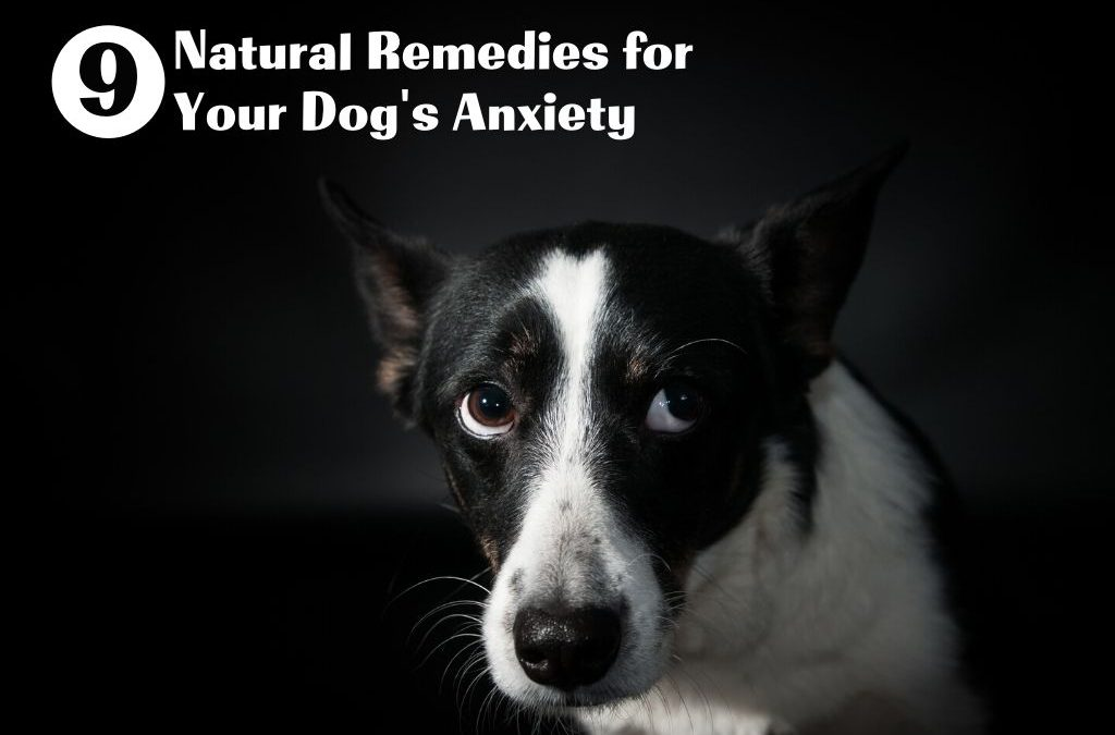 9 Natural Remedies for Your Dog's Anxiety