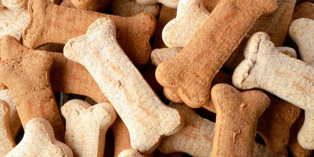 dog boarding treats