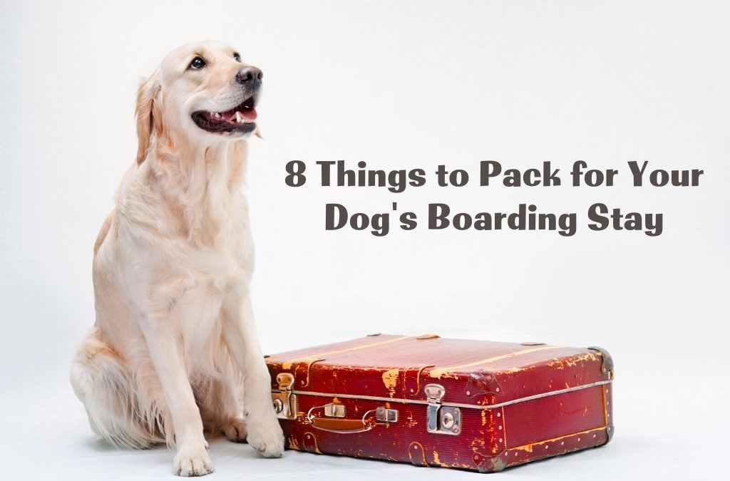 8 Things to Pack for Your Dog's Boarding Stay