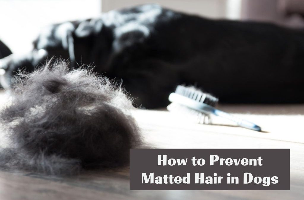 How to Prevent Matted Hair in Dogs