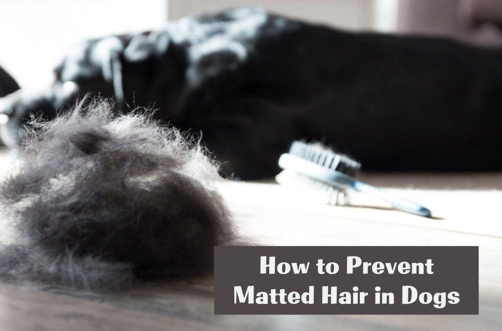 dog nest - matted hair