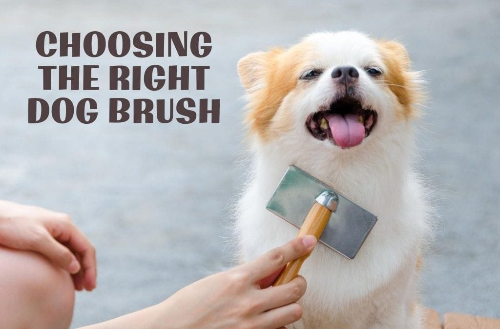 Choosing the Right Dog Brush