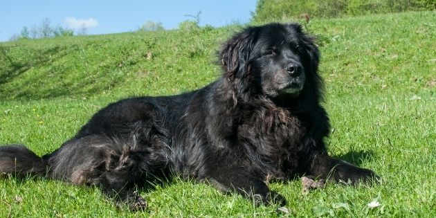 dog grooming - long hair