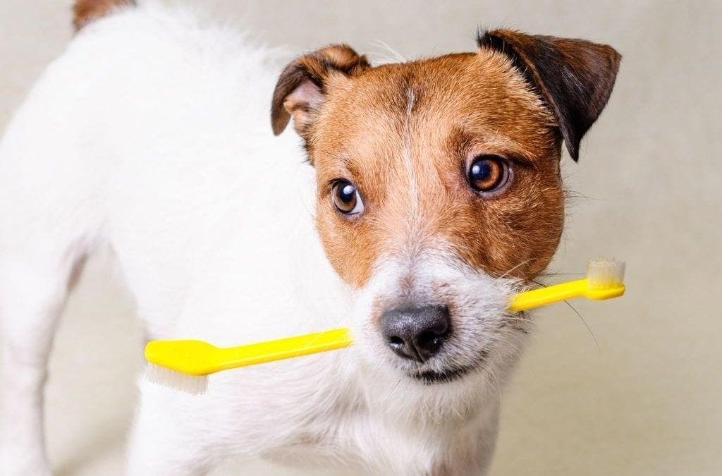 Why Dental Care is Critical to Your Dog's Health