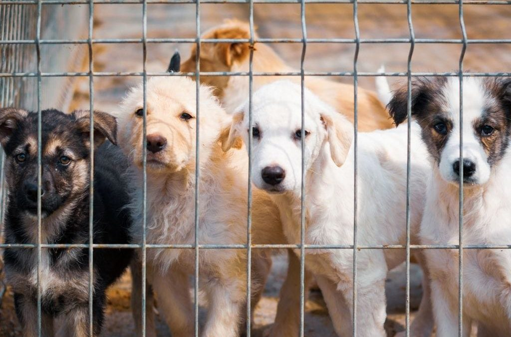 What You Should Know Before Adopting a Rescue Dog