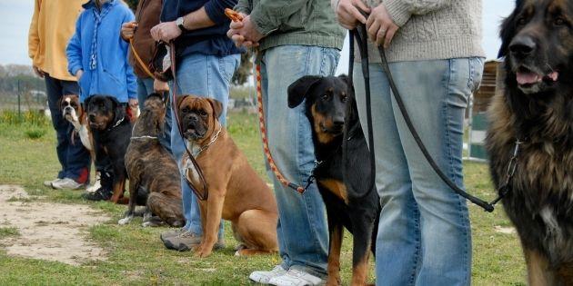dog group training