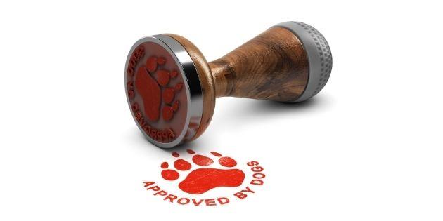 dog trainer certification