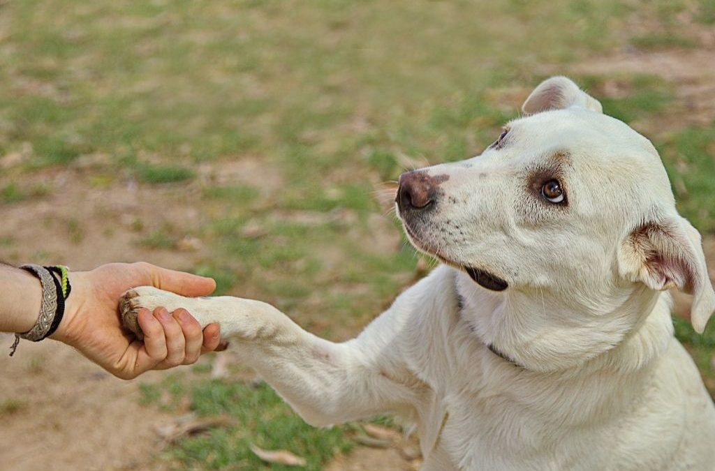 How To Choose A Dog Trainer