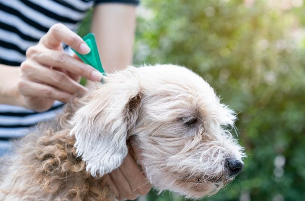 Protect Your Dog From Fleas and Ticks